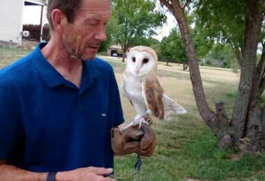 Don Johnson is seen holding his Barn Owl Zola. Don and his wife Carole moved to Wichita from Great Britain and went to great lengths to bring their birds of prey with them.